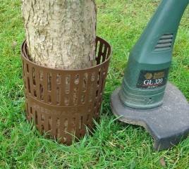 Ochrana stromu proti strunovce č.1