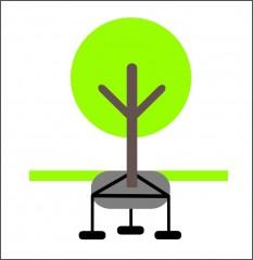 Podzemní kotvení stromu za bal č.1