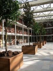 Tropické dřevo č.3